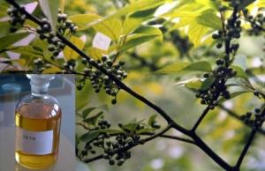 flies - plants - eucalyptus Oil 1