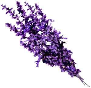 flies - plants - Lavender 2