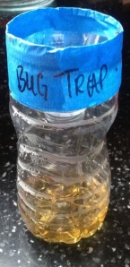 flies - vineger trap water bottle 3