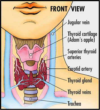 thyroid 03