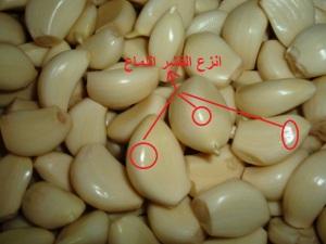 Peeled_garlic