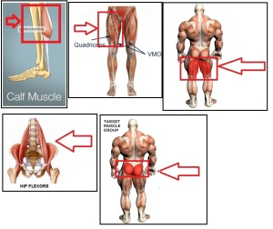 Affected Muscles