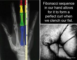 Fibonacci Sequence hand