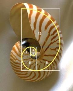Fibonacci Sequence Shell2