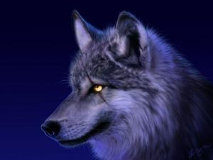 Dangerous Wolf 07