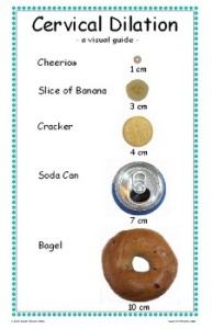Cervical Dilation 14